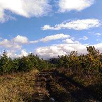 Красивые все таки осенью облока :: Оксана Романова