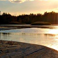 Золото в воде :: Лариса Димитрова