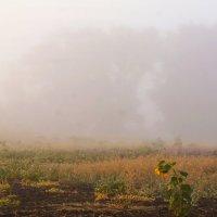 Ежики в тумане :: Игорь Александрович Оренбург