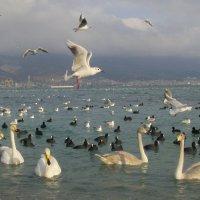 лебеди :: Марина Бельская