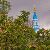Яблочный сад на о. Валаам :: Павел