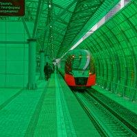 В зеленом окружении... :: Rabbit Photo