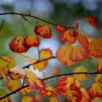 осень :: Светлана Пантелеева
