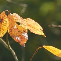 Осенние краски.... :: Tatiana Markova