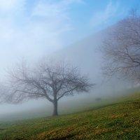 выплывают из тумана... :: Elena Wymann
