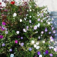 Цветы ушедшего лета :: татьяна