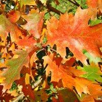 Краски осени.Вальс листьв :: Лидия (naum.lidiya)
