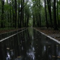 Осенний парк. :: Oleg4618 Шутченко