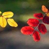 Краски Осени... :: Виктор Бусель