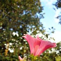Цветок дарющий вдохновение :: Герман