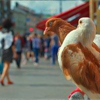 Голуби и ангел :: Цветков Виктор Васильевич