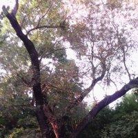 дерево :: Марина Бельская