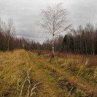 осень в лесу :: Galina G