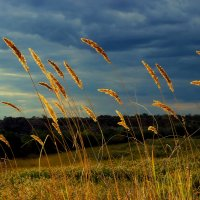 Однажды в поле... :: Nataliya Oleinik