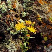 Маленькая жизнь в камнях :: Nataliya Oleinik