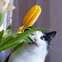 Начинающий флорист :: Avada Kedavra!