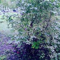 Ливень листьев кружевной Шелестит о ней одной... :: Ольга Кривых