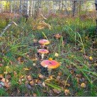 В осеннем лесу. :: Роланд Дубровский