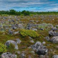 Долина камней. :: Николай