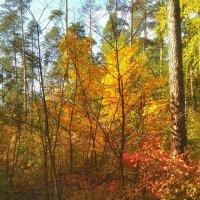 Осень в лесу :: Aleksandr Shishin