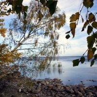 На берегу Ладожского озера. Осень :: Елена Павлова (Смолова)