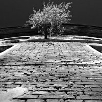 Дерево на стене :: Людмила Цвиккер