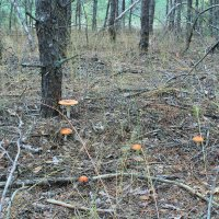 пошел в лес по грибы... :: Александр Дюдюкин