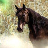 Пегий конь Карачаевской породы :: Ольга Гудым