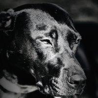 Выставка собак :: Михаил Дорошенко