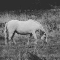 Лошадь :: Шура Еремеева