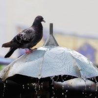 Фонтан - удобная поилка для птиц :: Shapiro Svetlana