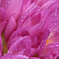 Цветы и осень :: Александр Сивкин