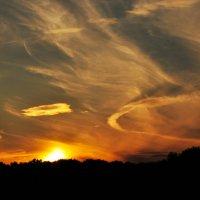 Закат над лесом :: Александр Аполонов