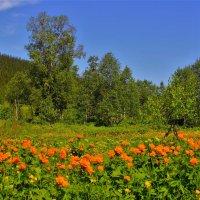 Огоньки цветут :: Сергей Чиняев
