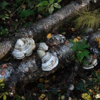Всюду грибы :: Валерий Чепкасов
