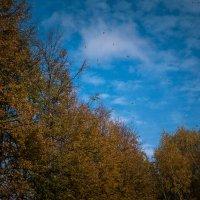 Осень .... :: Юлия Сургучёва