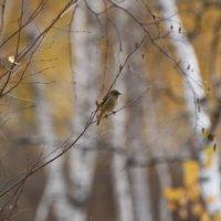 в осеннем лесу :: Анна