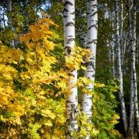 Осень золотая :: Сергей Козлов