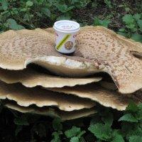 Всем грибам гриб! :: Дмитрий Никитин