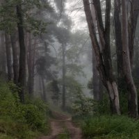 Путь через лес :: Михаил Корнилов