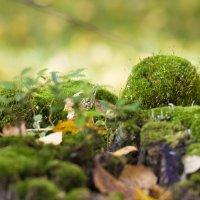 Лес в лесу. :: Андрей Леднев