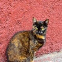 Случайный котик :: Марина Романова