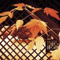 Рыжие листья осени :: Екатерина Торганская