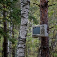 В лесу как дома! :: ИГОРЬ ЧЕРКАСОВ