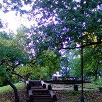 Лестница на пригорке в Александровском саду. :: Светлана Калмыкова