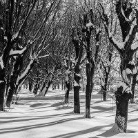 Контрасты зимы :: Александр Горбунов