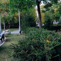 Зелёные кусты :: Света Кондрашова