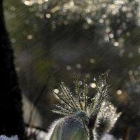 Весенний дождик :: Татьяна Борисова