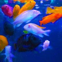 рыбы :: Таня