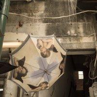 Ангелы сохнут в подворотне :: Sofia Rakitskaia